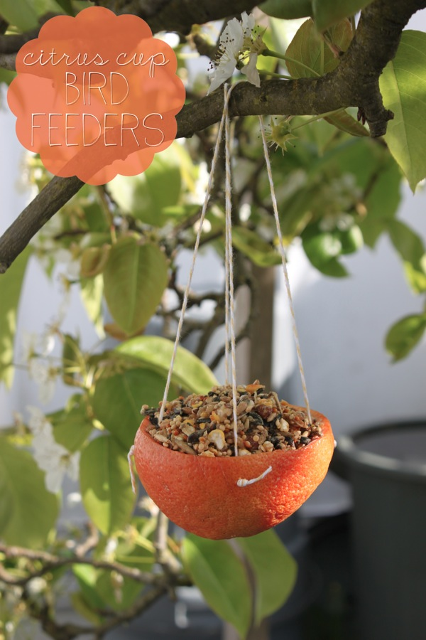 Citrus Cup Bird Feeders | Mama Papa Bubba